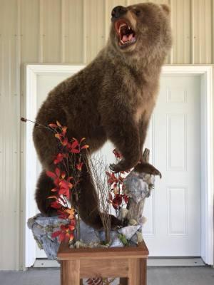 bear-2018.