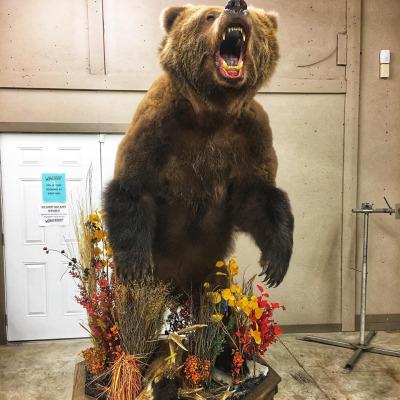 brown-bear-2019-1
