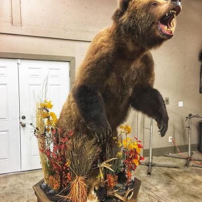 brown-bear-2019-2