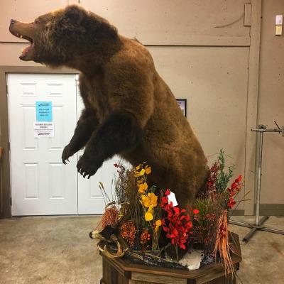 brown-bear-2019-3
