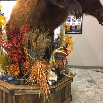 brown-bear-2019-4