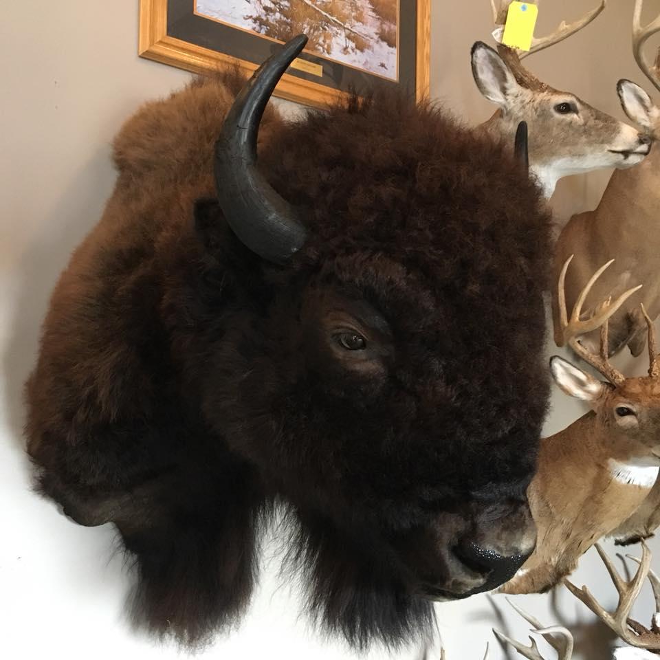 buffalo-1-2018