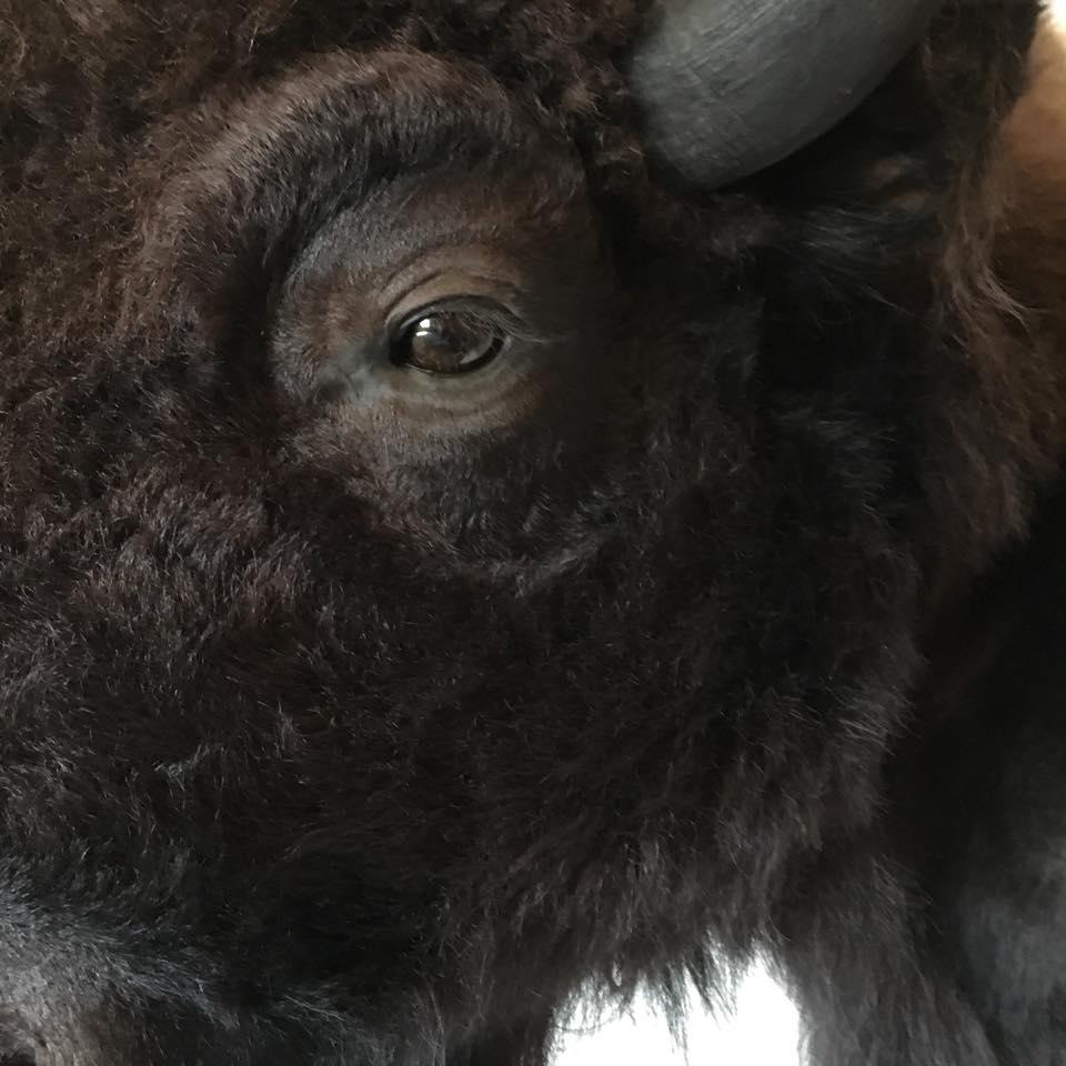 buffalo-2018