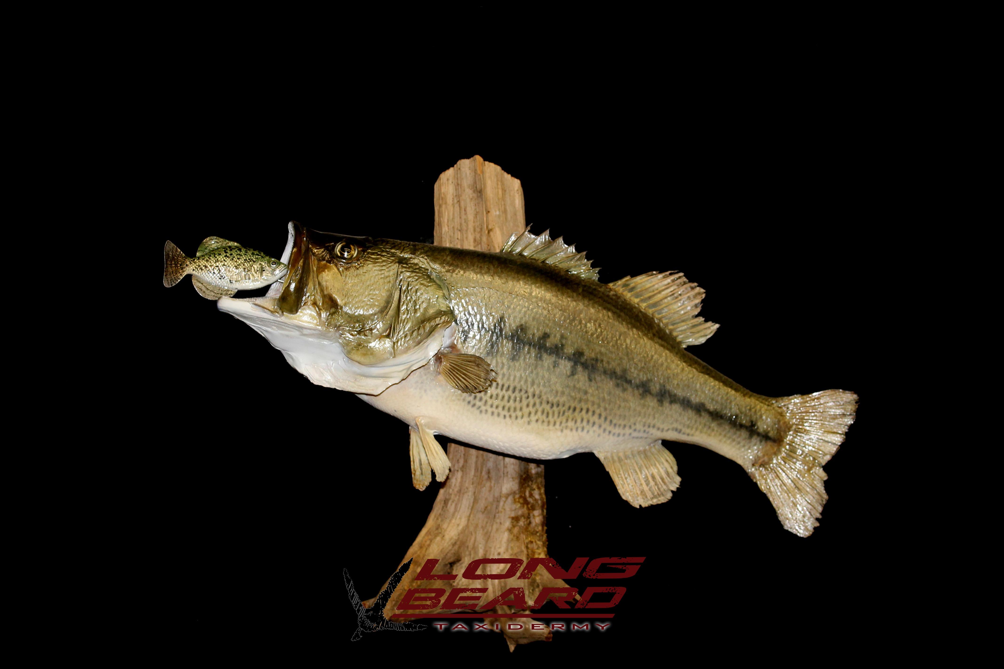 8lb-bass