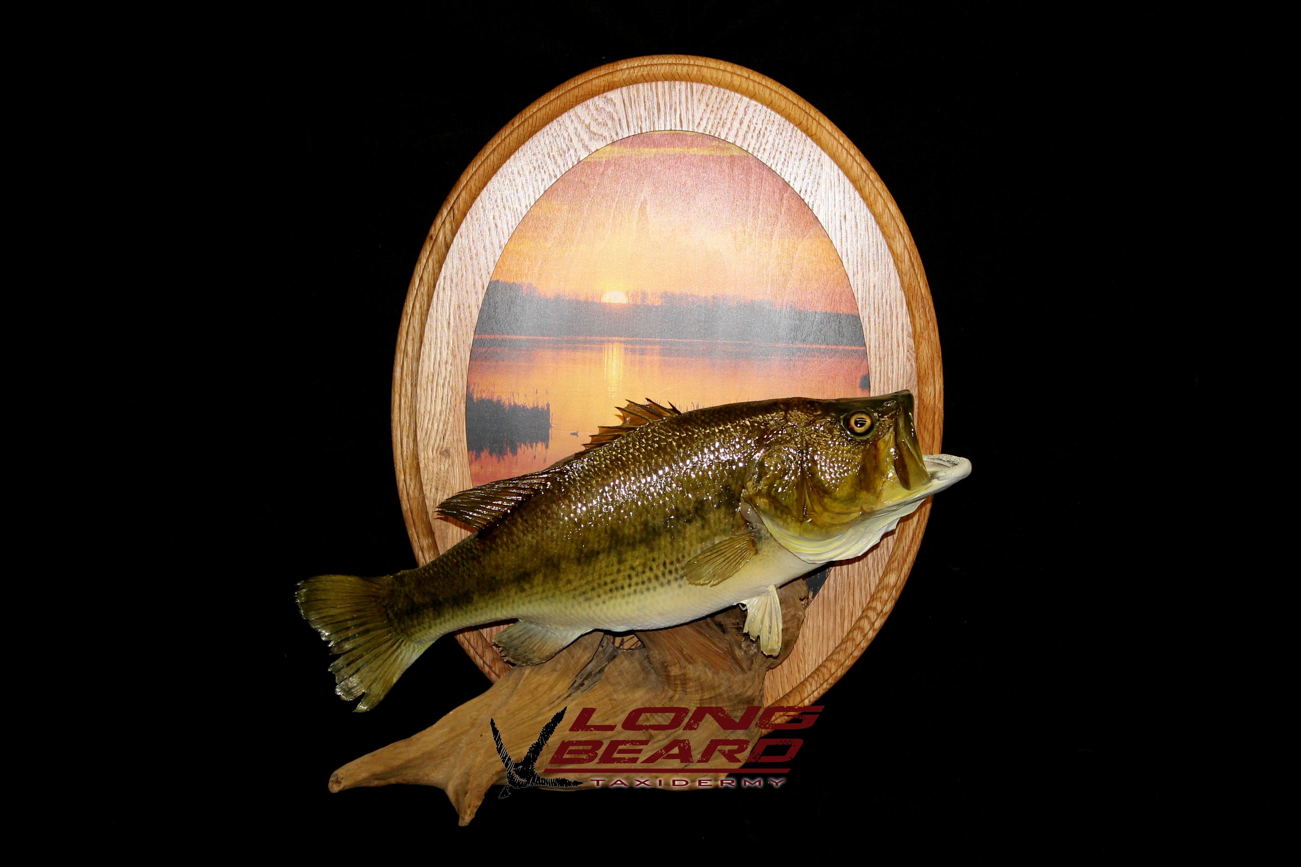 cooper-bass