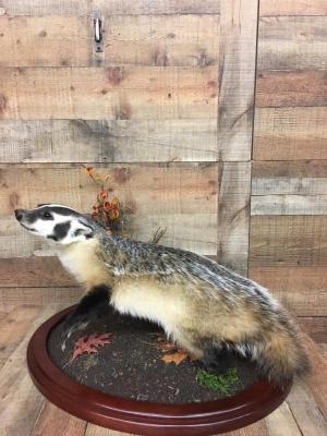 badger-2-18