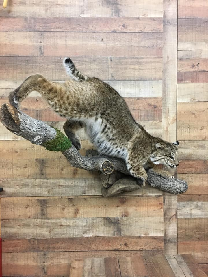 bobcat-30-2018