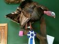 show-turkey