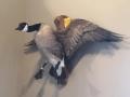 brett-goose