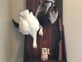 dead-mount-geese-18