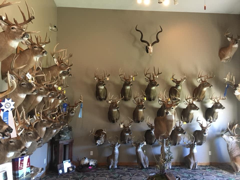 2018-fall-deer