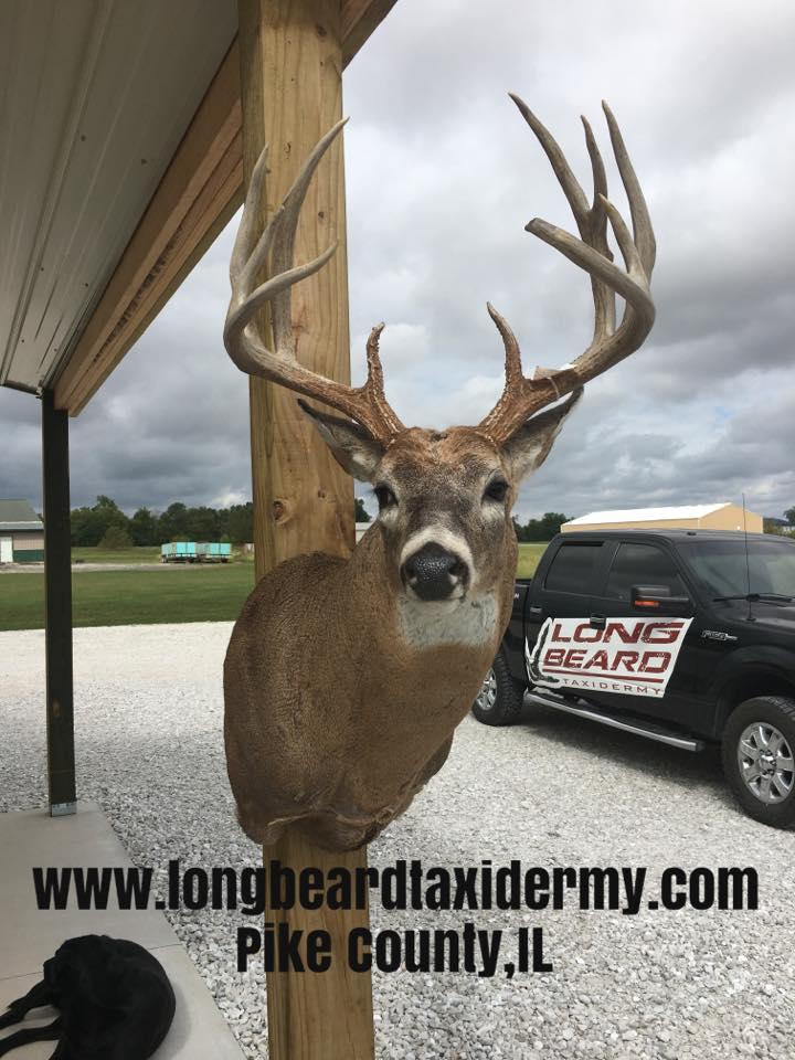 deer-2-2018