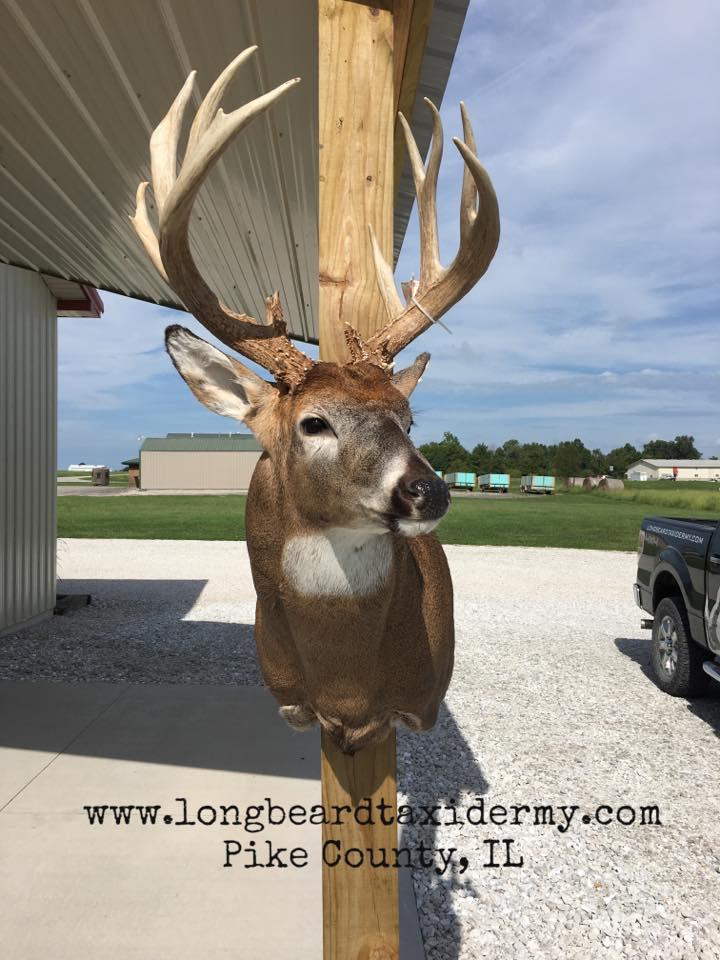 deer-6-2018