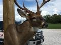 deer-3-2018