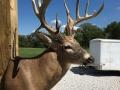 deer-5-2018