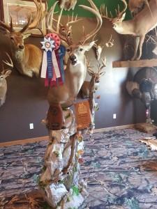 2016 show deer 1